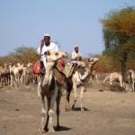 Камиларият се оплаква от лошото покриетие на мрежата и лошия дъх на камилата